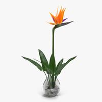 Bird of Paradise in Glass Vase