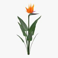 3d model bird paradise flower