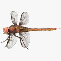 Dragonfly Not Rigged