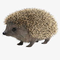 3d hedgehog