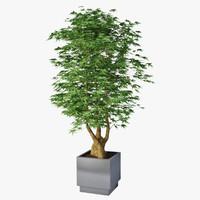 plant houseplant house 3d model