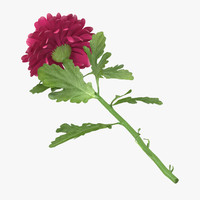 3d pink chrysanthemum laying - model