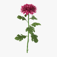 3d model pink chrysanthemum standing -
