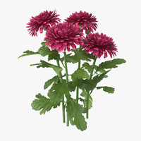 pink chrysanthemum natural group c4d