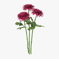 3d model pink chrysanthemum bouquet -