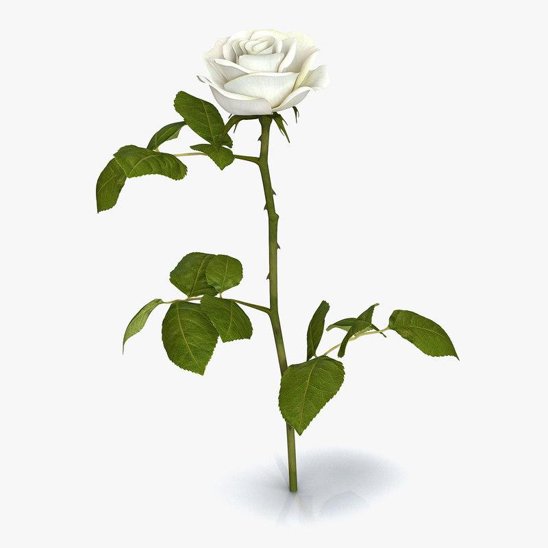 Rose White 3ds 3d model 01.jpg