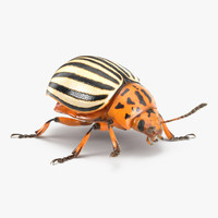 colorado potato beetle fur 3d model