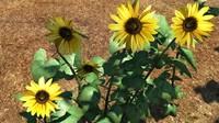 3d sunflower flower plant model