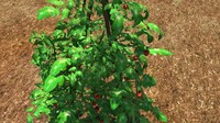 3d model tomato plant