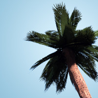 obj palm tree