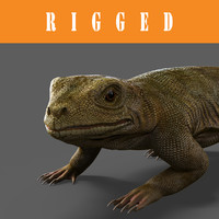 lizard_Rigged