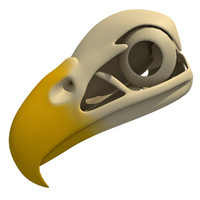 3d model bald eagle skull skeleton