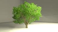 american elm tree 3d model