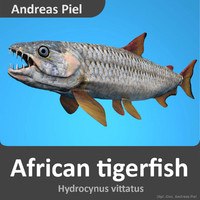 3d african tigerfish africa piranha fish model