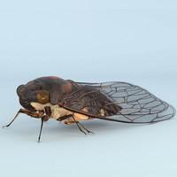 cicada rigged 3d ma