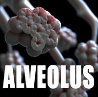 3d human alveolus