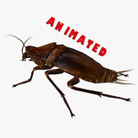 Cockroach Animated