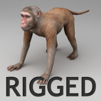 Rhesus macaque rigged