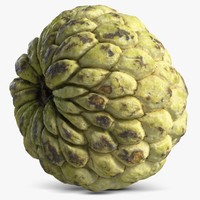 3d cherimoya custard apple