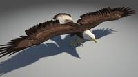 eagle bird