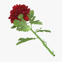 red chrysanthemum laying - 3d model