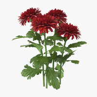 red chrysanthemum natural group 3d model