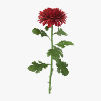 red chrysanthemum standing - max