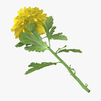 3d yellow chrysanthemum laying -