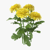3d yellow chrysanthemum natural group
