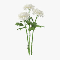 white chrysanthemum bouquet - 3d obj