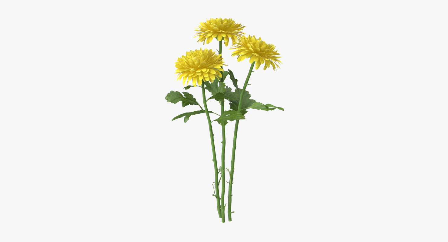 yellow chrysanthemum bouquet 3d model