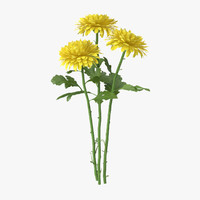 yellow chrysanthemum bouquet - 3d model
