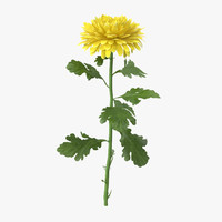 yellow chrysanthemum standing - 3d model