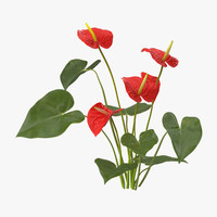 3d anthurium natural group -