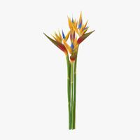 bird paradise bouquet - 3d model
