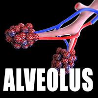 3ds alveolus