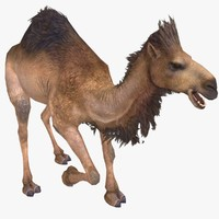 3d model camel animal