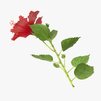 hibiscus laying - 3d max