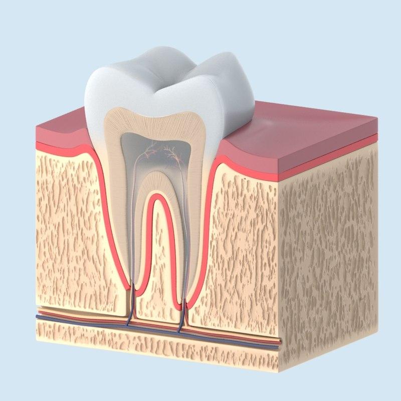 tooth_02.JPG