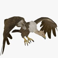 3d buzzard animal