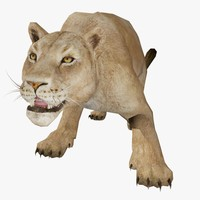 3d model of female lion animal