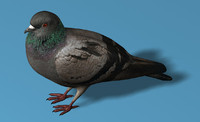 rigged pigeon 3d 3ds