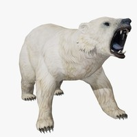 3ds polar bear animal