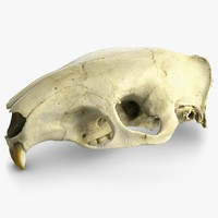 big rat skull raw 3d max