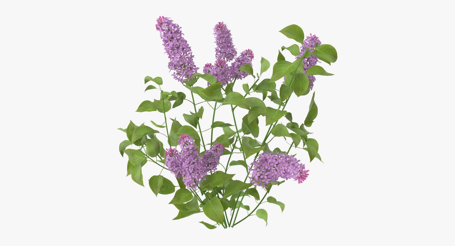 Lilac_Natural_Group_001_Thumbnail_0000.jpg