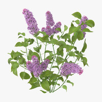 3d model lilac natural group -