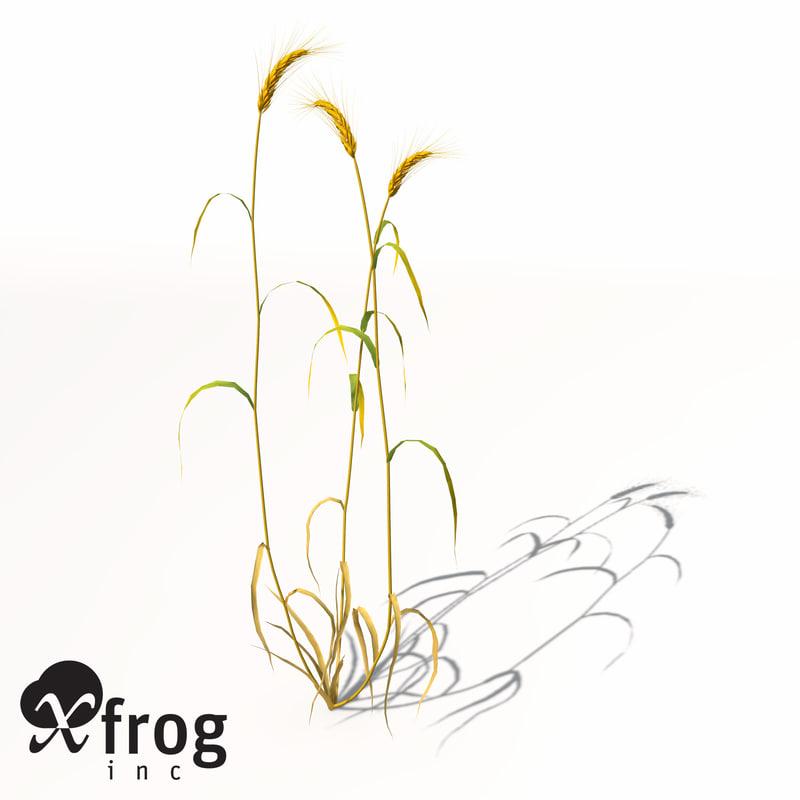 AG09-barley-8.jpg