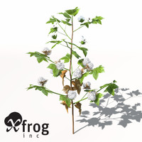 XfrogPlants Cotton