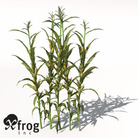 XfrogPlants Corn