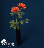 dahlia plants flowers max
